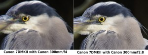 Comparison between f4 and f2.8 versions of Canon's 300mm prime lenses. Click for larger image.